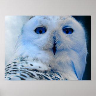 Blue Eyed Snow Owl Poster