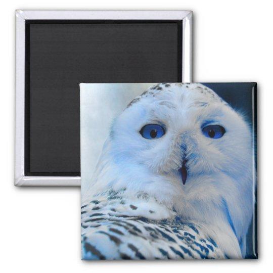 Blue Eyed Snow Owl Square Magnet