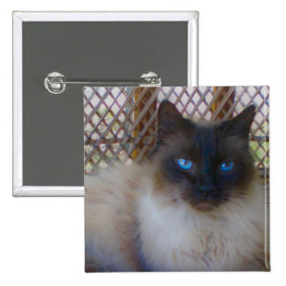 Blue Eyes Kitty Button