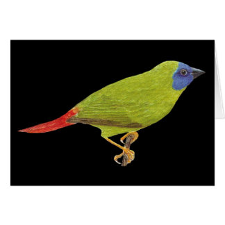 Blue-faced Parrot Finch - Erythrura trichroa Card