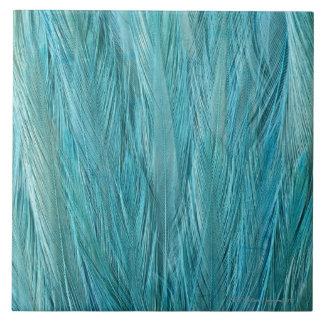 Blue Feathers Tile