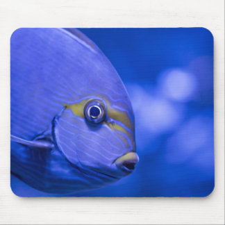 BLUE FISH by Michelle Diehl Mousepad