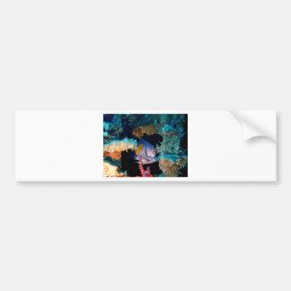 blue fish in coral reef car bumper sticker