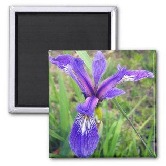 Blue Flag Iris Magnet
