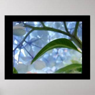 Blue Floral Fine Art Prints Hydrangea Flowrers
