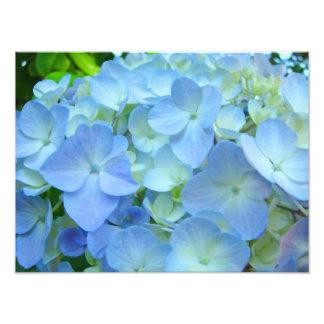 Blue Floral Hydrangeas Flowers art prints Photo