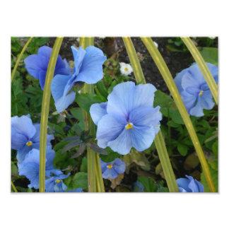 Blue Flowers Photo Print