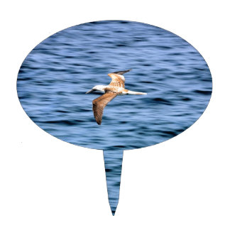 Blue footed boobie flying Galapagos Islands Cake Toppers
