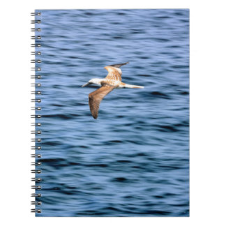 Blue footed boobie flying Galapagos Islands Journal