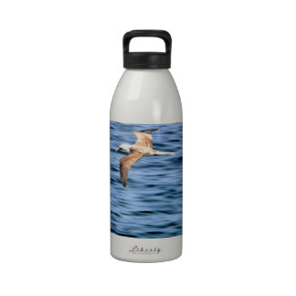 Blue footed boobie flying Galapagos Islands Drinking Bottle