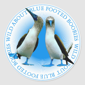 Blue Footed Boobies Birds Stickers