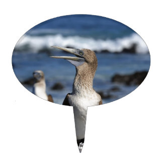 Blue footed Boobies Galapagos Islands Cake Topper