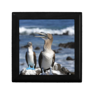Blue footed Boobies Galapagos Islands Trinket Boxes