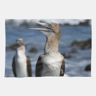 Blue footed Boobies Galapagos Islands Kitchen Towel