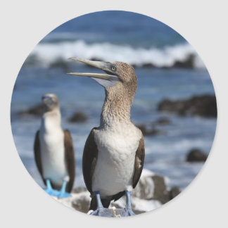 Blue footed Boobies Galapagos Islands Round Sticker