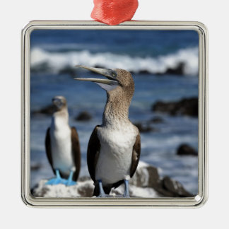 Blue footed Boobies Galapagos Islands Silver-Colored Square Decoration