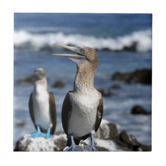 Blue footed Boobies Galapagos Islands Ceramic Tile