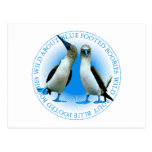 Blue Footed Boobies Post Card