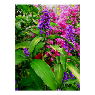 Blue Ginger and Bougainvillea Poster