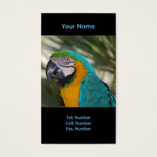 Blue & Gold Macaw Parrot Business Card