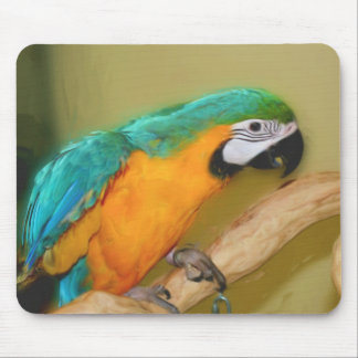 Blue Gold Macaw Parrot Painting Animal Mousepad