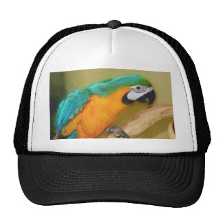 Blue Gold Macaw Parrot Painting Hat