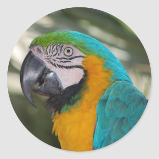Blue & Gold Macaw Parrot Stickers