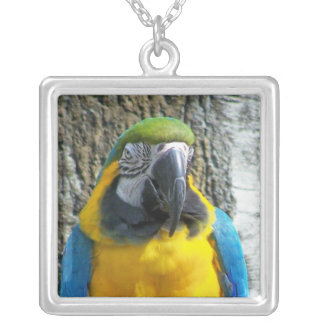 Blue Gold Macaw Square Pendant Necklace
