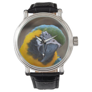blue gold parrot macaw head tilted wristwatch