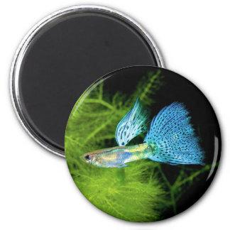 Blue Grass Guppy