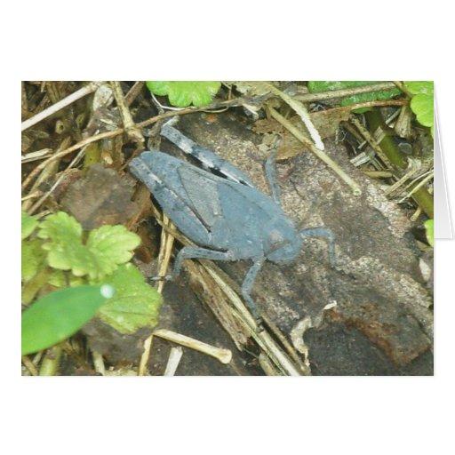 Blue Grasshopper Note Card
