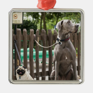 Blue Great Dane and pug dogs on leashes Christmas Ornament