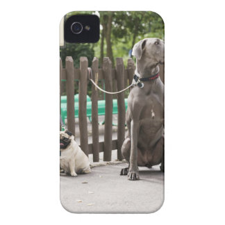 Blue Great Dane and pug dogs on leashes iPhone 4 Case