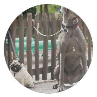 Blue Great Dane and pug dogs on leashes Plate