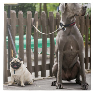 Blue Great Dane and pug dogs on leashes Tile