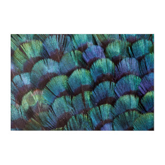 Blue-green pheasant feather design acrylic wall art