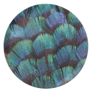 Blue-green pheasant feather design plate