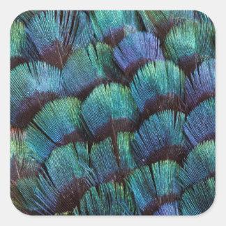 Blue-green pheasant feather design square sticker