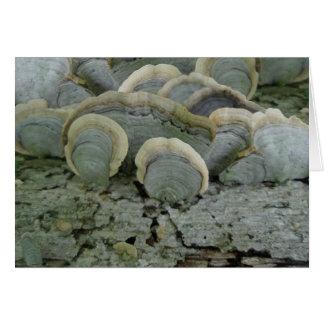 Blue Grey Shelf Fungus Note Card