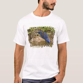 Blue Grosbeak drinking at backyard pond, T-Shirt
