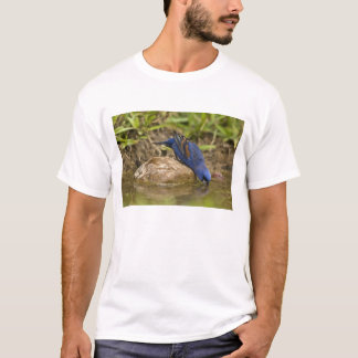 Blue Grosbeak drinking at backyard pond, T-Shirt