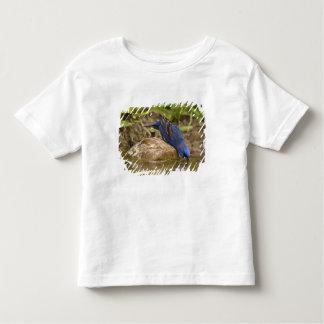 Blue Grosbeak drinking at backyard pond, Toddler T-Shirt