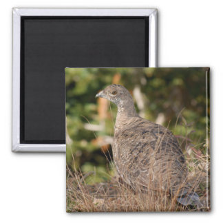 Blue Grouse Square Magnet