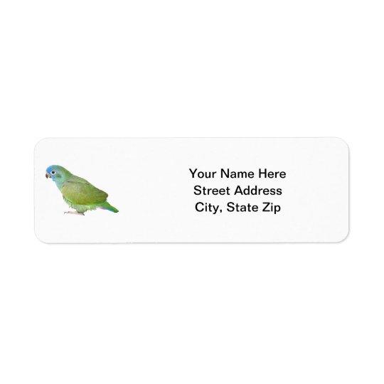 Blue Head Pionus Parrot