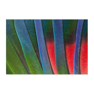 Blue-Headed Parrot Feathers Acrylic Wall Art