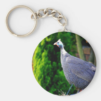 Blue Helmeted Guinea Fowl standing in the sun Basic Round Button Key Ring