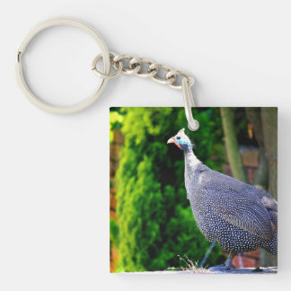 Blue Helmeted Guinea Fowl standing in the sun Double-Sided Square Acrylic Key Ring