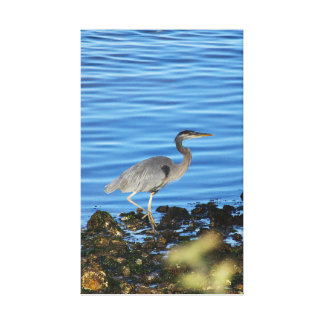 Blue Heron by the bay Canvas Print