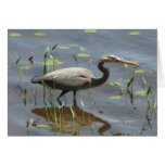 Blue Heron Greeting Cards