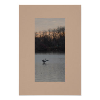 Blue Heron Landing at the Refuge Philadelphia Poster
